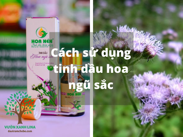 sử dụng tinh dầu hoa ngũ sắc