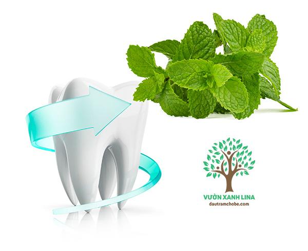 bảo vệ răng miệng lá bạc hà
