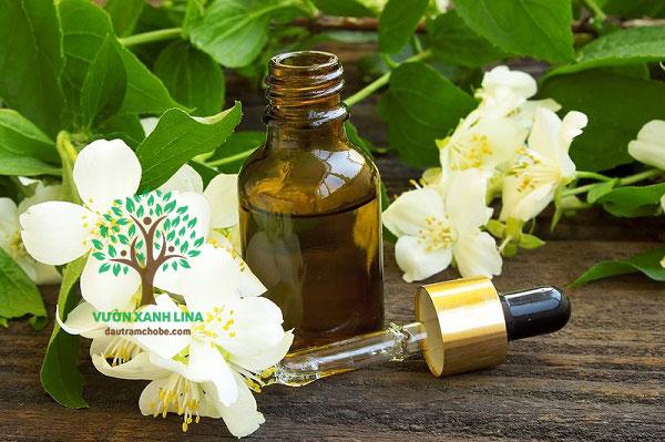 tinh dầu hoa bưởi